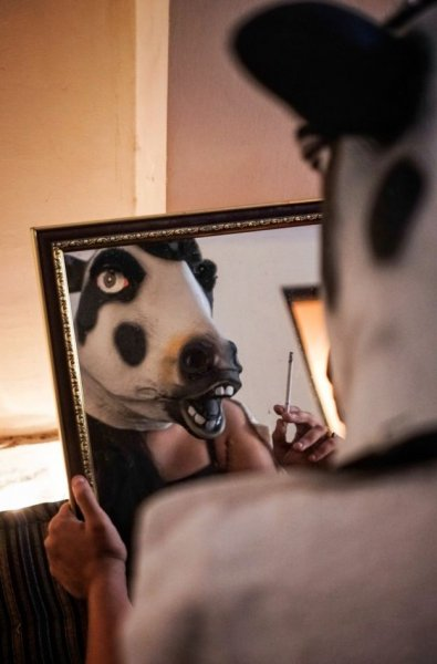 Donne mascherate da vacche in India-6