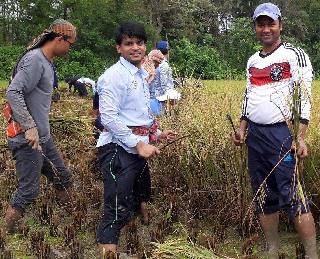 Harvesting rice in Bangladesh