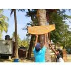 Ragazze cattoliche ripuliscono le spiagge dello Sri Lanka-10