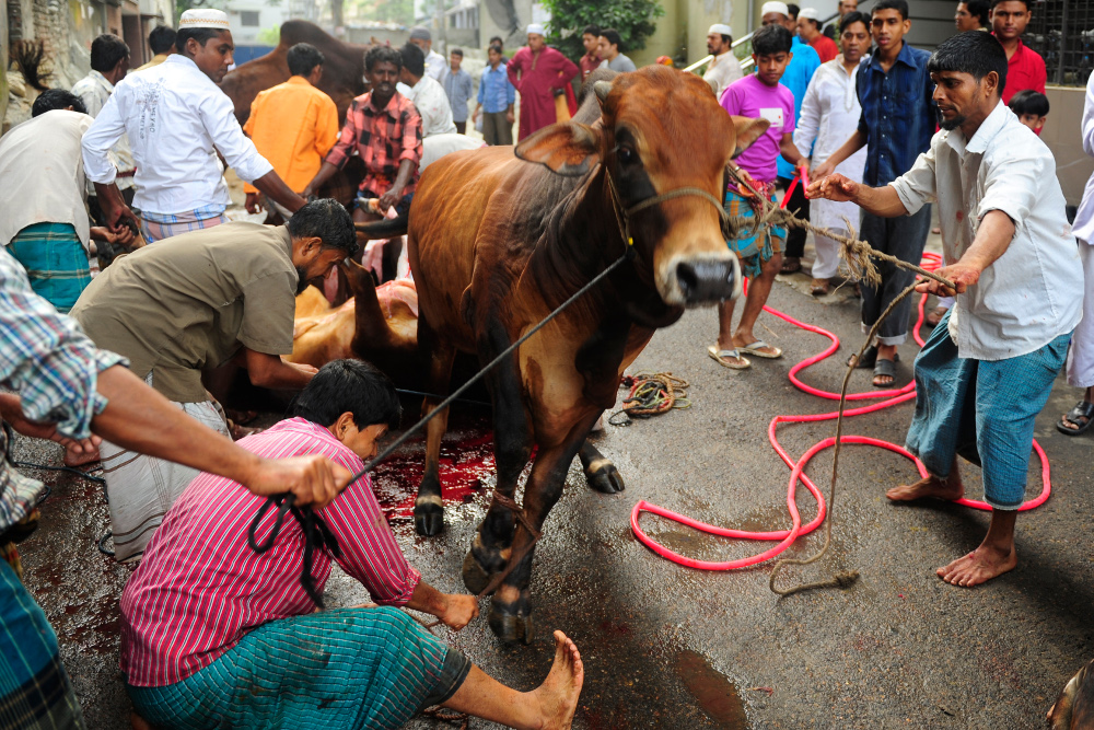 Bangladesh As Beef Prices Jump Consumption And Employment
