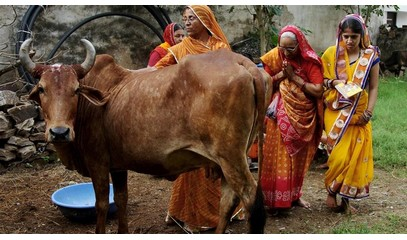 INDIA_-_0712_-_Supreme_Court_suspends_cattle_slaughter_ban.jpg