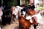 NEPAL_-_0925_-_Festa_indù.jpg